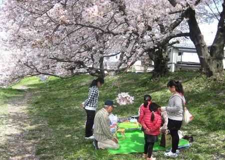 北越谷 桜 2013.04-5