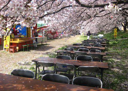北越谷 桜 2013.04-6