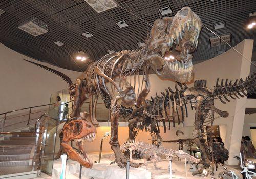 自由研究 恐竜 まとめ方