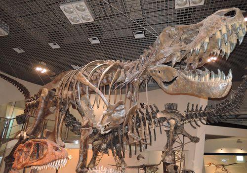 国立科学博物館の展示コーナー