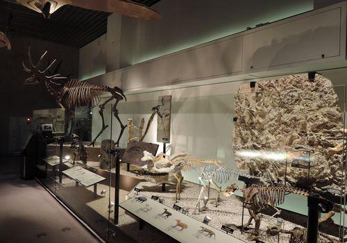 科学博物館の展示フロア