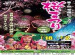 今帰仁グスク桜祭り