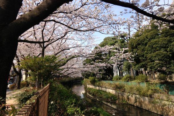舎人緑道公園 02