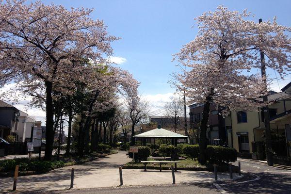 見沼代親水公園 桜 03