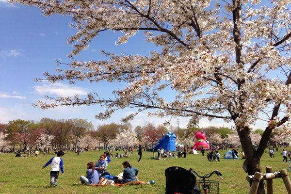 舎人公園の桜 02
