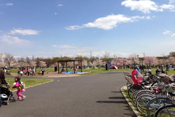 舎人公園の桜 05