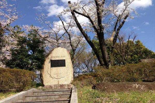 舎人公園の桜 06